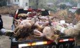 菜市场野兔牵出窝案:查出2吨野生动物