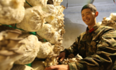 边关零下30℃,官兵喜摘鲜蘑菇