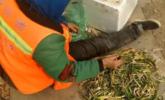 环卫工捡烂韭菜食用:太贵不舍得买