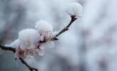 北京又下雪了