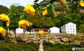 这里或许是九华山最美的地方!
