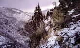 西藏高海拔地区的雪豹母子
