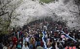 南京鸡鸣寺人山人海赏樱花