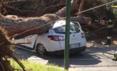 """意大利:大树""""压扁""""出租车 司机受伤送医丨组图"""