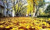 山师校园里的落叶季 随便一拍就是你喜欢的样子