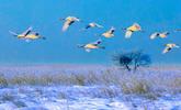 黑龙江打造最极致、最美好的冰雪盛筵