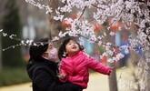 河北邢台:踏青赏花 拥抱春天