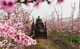 河北:春暖花開 田園農事忙