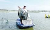 阜陽:螃蟹肥美市場俏
