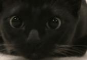 猫的反应速度到底有多快?