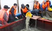 江苏:500万尾大黄鱼苗投放南黄海