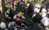 穿羽绒服准备围观企鹅的市民看见这一幕