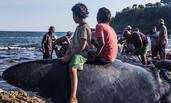 印尼渔民靠捕捞鲸鱼维生遭非议