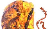 科学家首次在琥珀中发现蛇