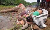 印度大象触电身亡 妇女跪着焚香送别