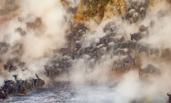 非洲:8万牛羚大军迁徙