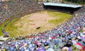 贵州举办斗牛比赛