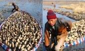 春季挖藕人:一天挖藕1400斤月挣万元
