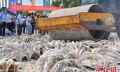 海南销毁40吨水生野生动物及其制品