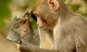 """""""自恋猴""""抱着镜子不撒手"""