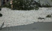 """扔海里的垃圾都被台风""""还""""回来了"""