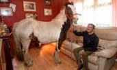 英国男子与他的宠物马