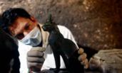 埃及塞加拉古墓群新发现7座法老墓葬
