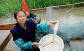 一条每斤卖价3000元的鱼