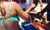 鲨鱼咬住女游客手臂不松口 一起送医了
