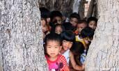 400年老树树洞可容纳14个儿童