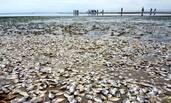 被冲上岸的海鲜泛滥成灾,泰国村民捡不过来