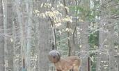野鹿头卡玻璃灯罩内 被当作怪物