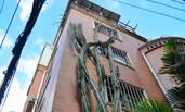 厦门:仙人掌长到5层楼高