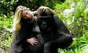 被放生后,大猩猩第一次见到了饲养者的妻子