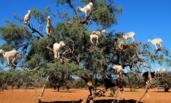 一棵树上站了12只山羊