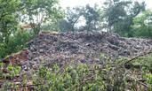 浙江:数百吨生活垃圾倾倒茶园景区