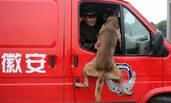 消防兵退伍,搜救犬几次扑上车要跟着走