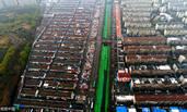 """济南:2.2公里长河道""""人工造绿"""""""