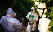 """""""病毒猎人""""在昆明一蝙蝠洞发现SARS病毒所有基因"""