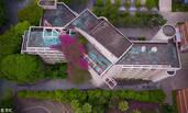 广西高校现30米三角梅瀑布