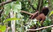 亚马逊雨林最后原始土著:独居22年