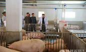 金正恩视察猪农场 喜笑颜开心情大好