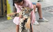 福建:9岁女童遛老虎