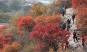 北京西山红叶正当时 游客登山赏景