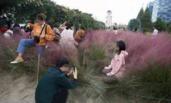 种三年的网红花海仅三天被毁