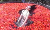 江西宜春举办温泉吃辣椒挑战赛 冠军1分钟吞20个辣椒
