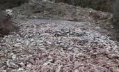皮草工厂:活剥貂皮 数千尸体遗弃荒野