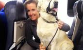 一场灾难后,宠物被允许带上客机飞行