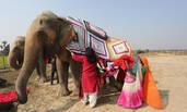 印度妇女为大象织毛衣抵御寒夜