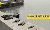 放生龟因水质不适接连死亡 管理员:这是杀生
